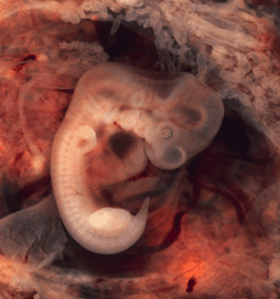embryo images day by day